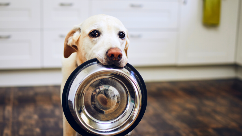 About Feasibility of Online Pet Products For Your Pets.